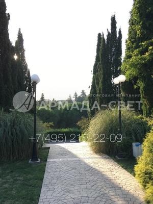 img_ARMADASVET-4455